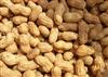 98%木犀草素Luteolin