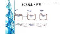 鲁氏耶尔森菌PCR检测试剂盒说明书