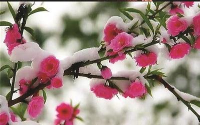 4867,春二三月倒春寒(原创) - 春风化雨 - 春风化雨的博客