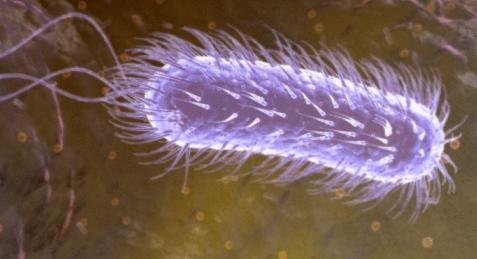 幽门螺杆菌症状_幽门螺杆菌如何根治