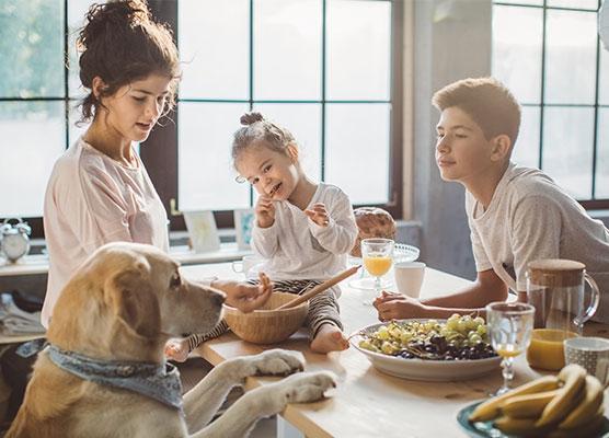 具有較大靈活性的高品質:寵物食品生產中的挑戰日益增加